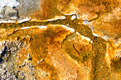 Bacterial mats from thermophilic organisms, Yellowstone National Park, Wyoming Royalty Free Stock Photos
