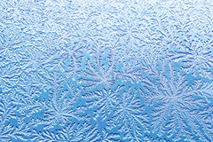 Bacterial pattern like a frost. Macro shot of bacterial pattern of Bacillus subtilis like a frost royalty free stock photography