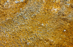 Bacterial Texture Stock Image
