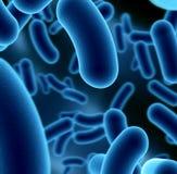 Bacterias Imagen de archivo