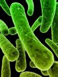 Bacterias Imagen de archivo libre de regalías
