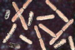 Bacterias Bifidobacterium, bacterias barra-formadas anaerobias grampositivas que son parte de la flora normal del intestino human stock de ilustración