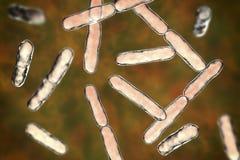 Bacterias Bifidobacterium, bacterias barra-formadas anaerobias grampositivas que son parte de la flora normal del intestino human ilustración del vector