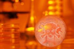 Bacterias crecientes de la placa de Petri de un cráneo y de la bandera pirata foto de archivo