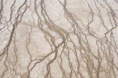 Bacterias de color marrón en Yellowstone Imagen de archivo libre de regalías