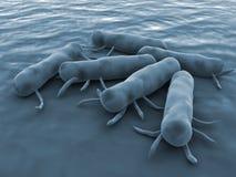 Bacterias de las salmonelas Imagen de archivo libre de regalías