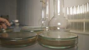 Bacterias del análisis de los tubos almacen de video