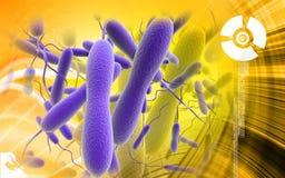 Bacterias del cólera libre illustration