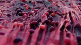 bacterias 4K en tejido metrajes