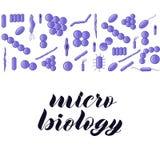 Bacterias roxos Micro rotulação da mão da biologia ilustração royalty free