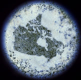 Bacterias in the shape of Canada viewed through a microscope.(se Royalty Free Stock Image