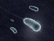 Bacterie Royalty-vrije Stock Afbeeldingen