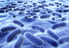 Bacteries Stock Photos