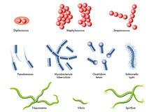Bacteriën Royalty-vrije Stock Foto's