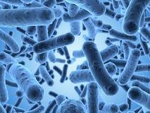 Bacteriën onder een aftastenmicroscoop die worden gezien Stock Afbeeldingen