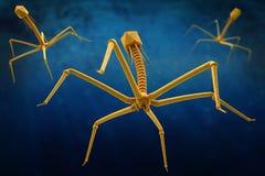 Bacteriophage- eller fagocytvirus som anfaller och smittar bakterier vektor illustrationer