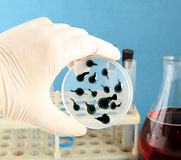 Bacterium. Virus bacterial test on a blue background stock photography
