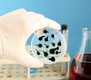 Bacterium Stock Photography