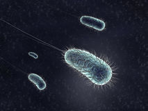 Bacterium Royalty Free Stock Images