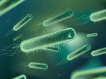 Bacterium Stock Photos