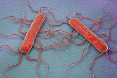 Bacterium Listeria monocytogenes. 3D illustration of bacterium Listeria monocytogenes, gram-positive bacterium with flagella which causes listeriosis royalty free illustration
