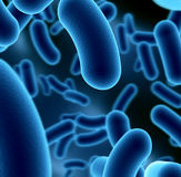 Bactérias Imagem de Stock