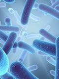 Bactérias Fotografia de Stock Royalty Free