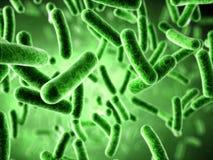 Bactéries Photographie stock libre de droits