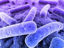 Bactéries Photo libre de droits