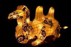 Bactrische kameel Chinese lantaarn Royalty-vrije Stock Afbeelding