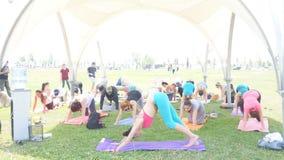 Bacu, Azerbaigian, può 15, 2017: Classi di yoga delle donne e degli uomini durante il giorno festivo di yoga video d archivio