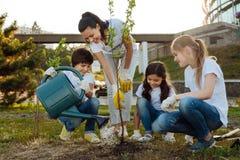 Baczna chłopiec nalewa nowej rośliny obraz royalty free