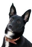 baczny pies zdjęcie stock