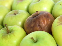 Bad apple in the bunch. Bad apple amongst a group of fresh green apples Royalty Free Stock Photography
