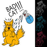 Bad Cat Stock Photo