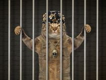 Bad cat behind bars. The bad cat in a bandana is behind bars in the prison royalty free stock photography
