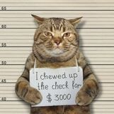 Bad cat chewed up the check. The bad cat chewed up the check for 3000 dollars. He was arrested for it stock photography