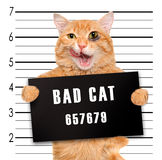 Bad cat. Royalty Free Stock Photography
