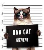 Bad cat. Isolated on white Stock Photos