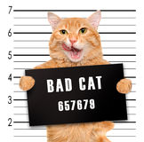 Bad cat. Royalty Free Stock Photos