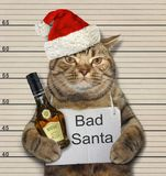 Bad cat with rum in the prison royalty free stock photos