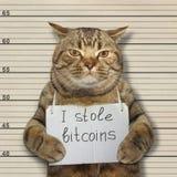 Bad cat stole bitcoins. The bad cat stole a lot of bitcoins stock photos