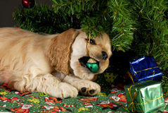 Bad christmas puppy stock image