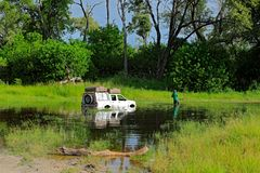 Bad day in Africa. Safari car drowned in river Khwai, Moremi, Okavango delta in Botswana. Travel holiday in Africa durrinf green s stock image