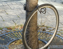 Bad day. A wheel of a stolen bicycle, still locked to a tree Royalty Free Stock Photos