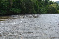 Bad in de rivier royalty-vrije stock foto