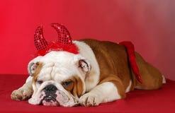 Bad dog Royalty Free Stock Photography