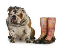 Bad dog Royalty Free Stock Images