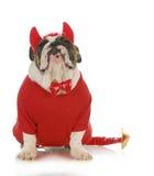 Bad dog. English bulldog dressed up like a devil isolated on white background Royalty Free Stock Photo
