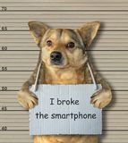 Bad dog broke the smartphone. The bad dog broke the smartphone. He arrested by the police for this crime and sent to prison. Lineup background stock photography